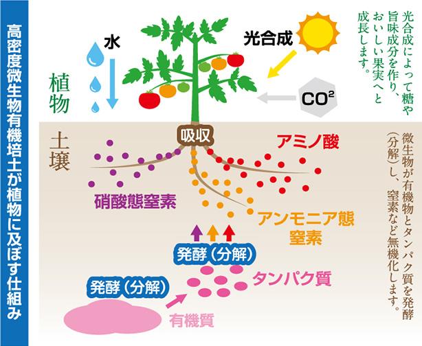 高密度微生物有機培土が食物に及ぼす仕組み